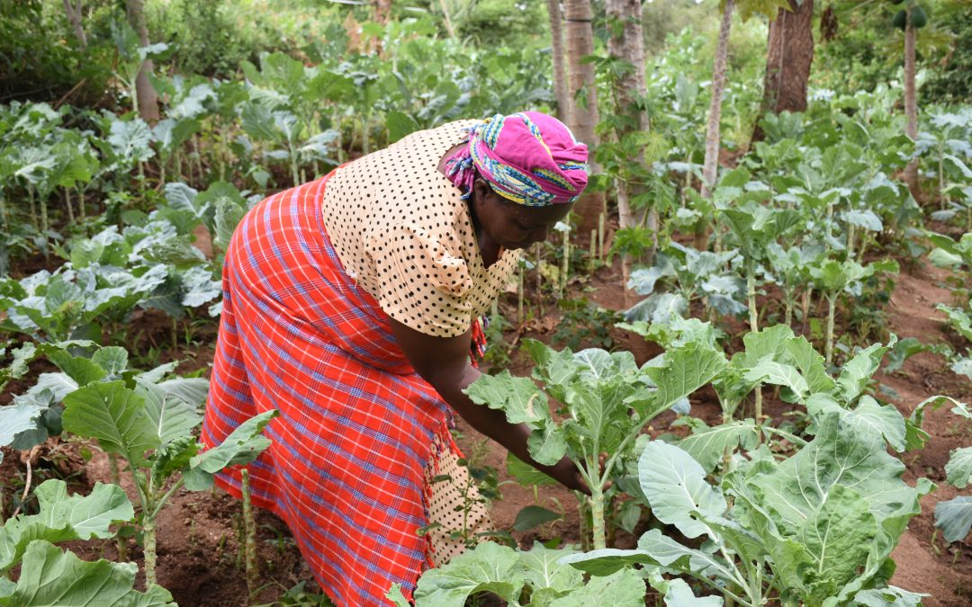 Accelerating Rural Women Access to Agricultural Markets and Trade
